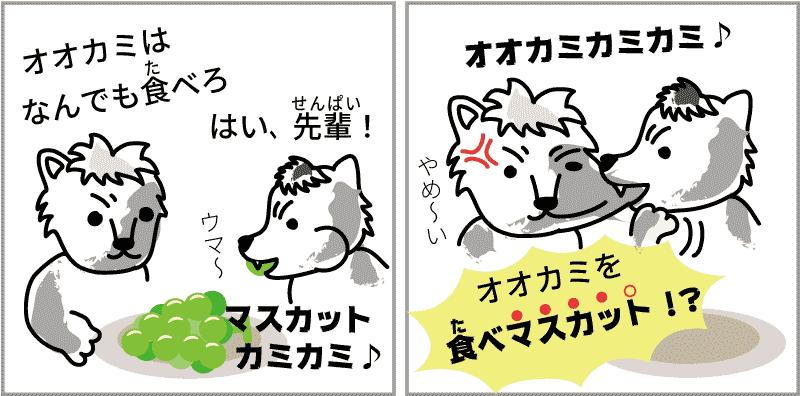 岡山県のマスカット