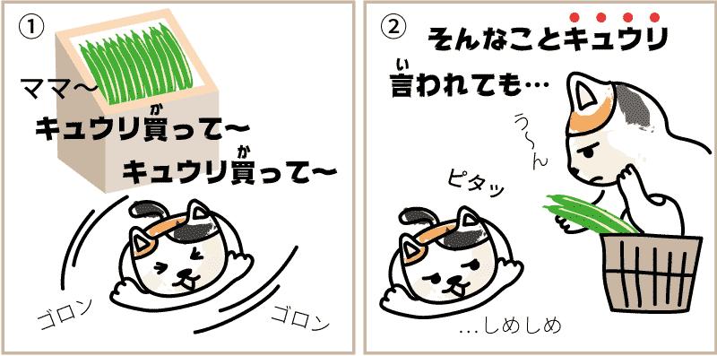 宮崎県のキュウリ1