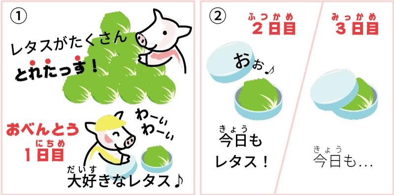 長野県のレタス1